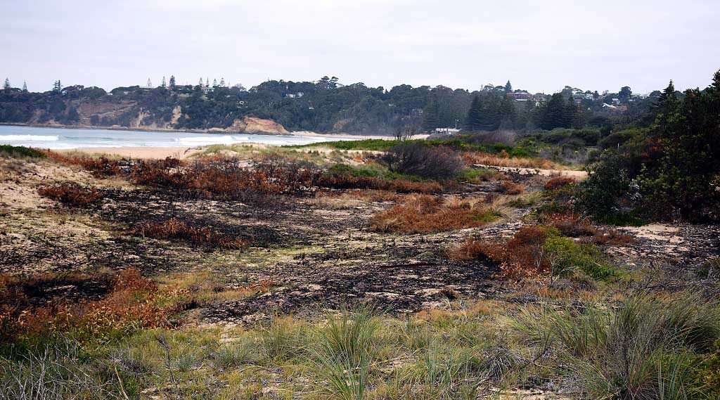 Fire damaged dunes