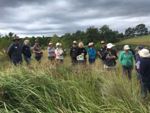 A group of people standing in a paddock with long grasses in Quaama with botanist Jackie Miles