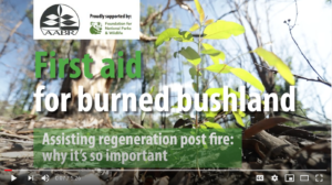 AABR First Aid for burned bushland you tube video screenshot